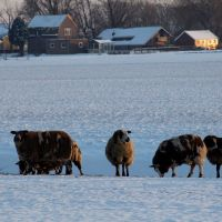 winter landscape Noordbeemster. Netherlands, Хаарлем