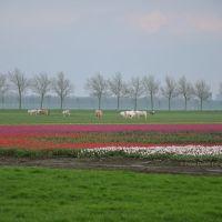 * Hollands tafereel, Хаарлем