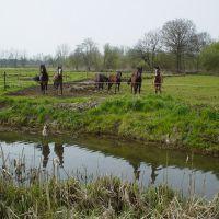 Paarden in wei bij Gulden Aa, De Bundertjes, Helmond, Хелмонд