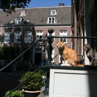 Cat couple; Broederplein in Zeist.