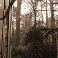 Реликтовый лес за окном, Пицунда