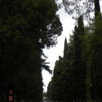 дорога к морю по улице Гицба, Пицунда