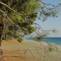 Абхазия. Пицунда.  Море и сосны 9. Abkhazia. Pitsunda. The sea and the pines, Пицунда