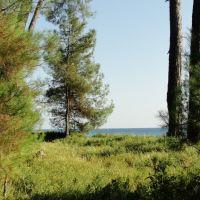 Абхазия. Пицунда. Сосны на берегу моря, Пицунда