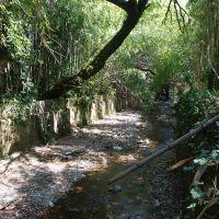 Ботанический сад, Сухуми