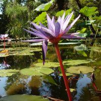 Hortus Batanicus / Аботаникатэ Бахча, Сухуми