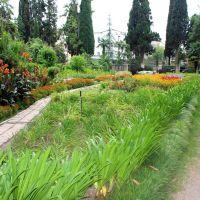 В саду, Сухуми