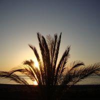 Batumi Sunset, Батуми
