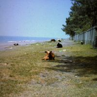 Beach Kobuleti (1985), Кобулети