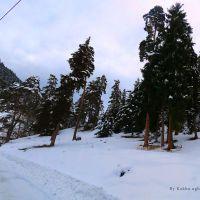 Abastumani forest, Абастумани