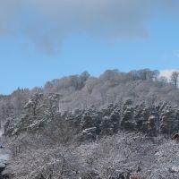 Wiew of trees, Бакуриани