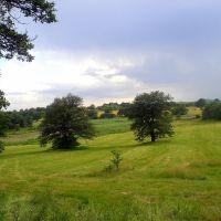 pastures, Дманиси