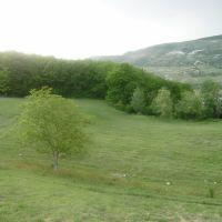 Sareki, Сачхере