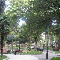 Тбилиси-Александровский сад, Тбилиси
