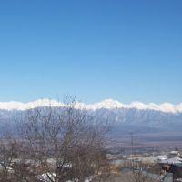 kavkasioni, Телави