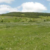 Тетрицкаро - вид на поле у заброшенной в/части, Тетри-Цкаро