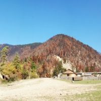 Borjomi  Forest, Burned By Russians., Цагери