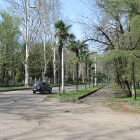 Palm trees, Цхалтубо