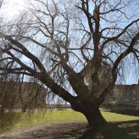 University Park in Aarhus. Sharp April sun. Anna shot., Орхус