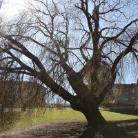 University Park in Aarhus. Sharp April sun. Anna shot., Орхус