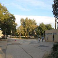 Arad (Avishoor), Арад