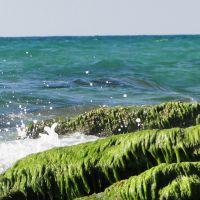 GREEN CLIFF, Ашдод