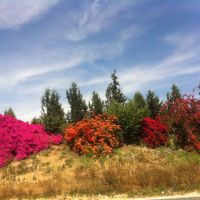 Timorim, Israel, Кирьят-Малахи