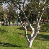 Kiryat Malakhi, Park, Кирьят-Малахи
