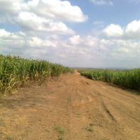 Corn Fields, Кирьят-Малахи