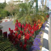 Kefar Sava, Israel by musca.ro, Кфар Саба