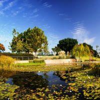 Ecological pond, Кфар Саба