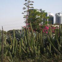 Cacti in Ganei Yehoshua, Бнэй-Брак