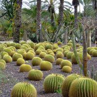 Cactuses, Бнэй-Брак