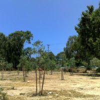 Молодые деревья (Small Trees), Натания