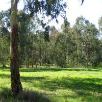 зелёная поляна, Натания