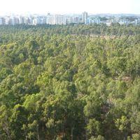 Small forest in side Netanya ,Israel ., Натания