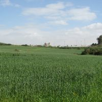 Field, Нэс-Циона