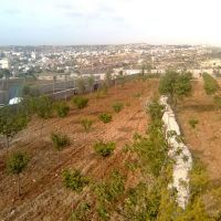 taibah, Ришон-ЛеЦион
