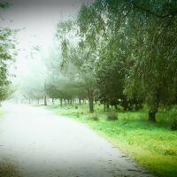 יער ראש העין, Рош-ха-Аин