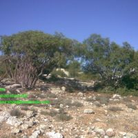 فلسطين الخليل قصر ابو عطوان, Рэховот