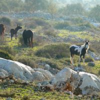 Free Horses, a ravine between Salfit and Ariel (1), Ариэль