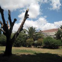 Kfar Hanoar Mosinzon view, Од-а Шарон