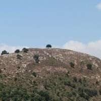 Karmiel region, Nahal Hilazon Single tree on Bald Mountain, Israel, Кармиэль