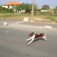 dog running at nahariya, Нагария