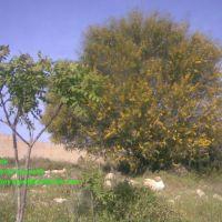 فلسطين الخليل فرش الهوى, Нацэрэт