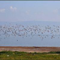 Птицы. Для Анатолия. Озеро Кинерет. Sea of Galilee #3, Мигдаль аЭмек