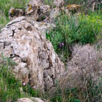 Outcrop of stones, flora, Gamla, Golan Heights, Кацрин