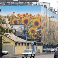 Sunflowers in the city, Yigal Alon, Tel Aviv, Гиватаим