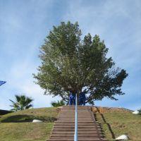 Lone Tree, Ricefeld, Qiryat ono, Кирьят-Оно