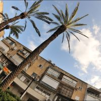 Про пальмы, рисующие небо..., Рамат-Ган